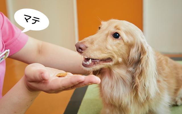 愛犬の歯みがき方法