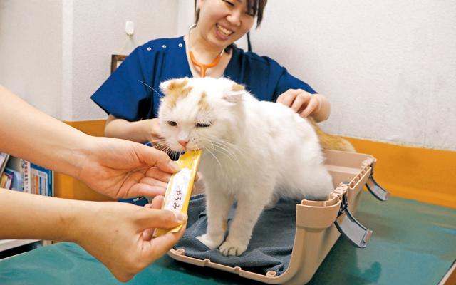病院が苦手な猫の飼い主さん必見のキャットファーストな通院術