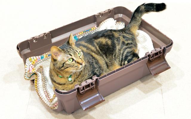 病院へ連れていくために猫を安心させる方法