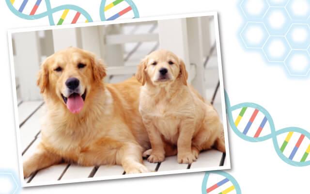 血統鑑定や遺伝性疾患の診断だけじゃない。いま、「遺伝子検査」に注目!