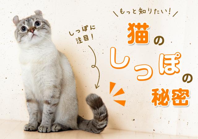 01猫のしっぽの役割と使い方でわかる猫の気持ち
