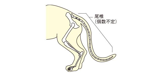 02猫のしっぽの構造