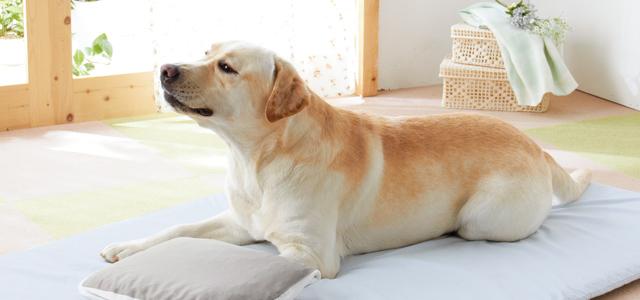01もしかして認知症?犬の認知症の特徴と対策方法