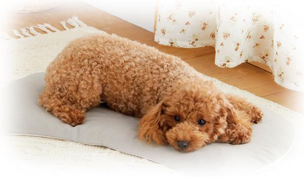 ゆるい 子犬 うんち 愛犬が軟便になった時に考えられる原因や対策まとめ