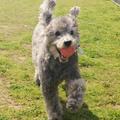 【獣医師監修】犬の歩き方がおかしい?その原因や症状別の対処法を解説