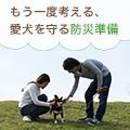 【犬と防災】被災時に愛犬を守る方法と用意しておきたいもの