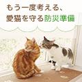 【猫と防災】被災時に愛猫を守る方法と用意しておきたいもの