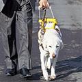 盲導犬について知ろう