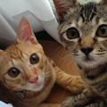 保護猫との出会いと暮らし~家族に出会うもう一つの選択~