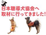 日本聴導犬協会へ取材に行ってきました!