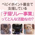 「子猫リレー事業」ってどんな活動なの?