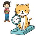 猫の肥満について知りたい!