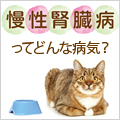 高齢猫にしのび寄る慢性腎臓病ってどんな病気?
