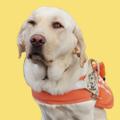 日本盲導犬協会へ取材に行ってきました!