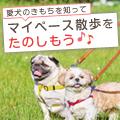 愛犬のきもちを知ってマイペース散歩をたのしもう♪―前向きなときの仕草―
