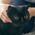 猫が安心できる愛情抱っこ
