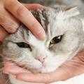 愛されマッサージで愛猫との絆を深めよう!