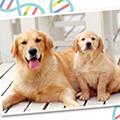 いま、「犬の遺伝子検査」に注目!