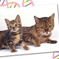 いま、「猫の遺伝子検査」に注目!