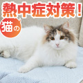 猫の熱中症対策!予防の方法と対策グッズを紹介