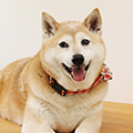 【医師監修】犬アレルギーの症状と原因は?愛犬と暮らすためにできる対処法を紹介