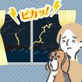 【獣医師監修】犬が雷や花火など大きな音を怖がる理由とその対処法!