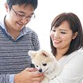 犬を家に迎える4つの方法~自身に適した出会いの場とは?~