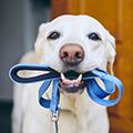 犬と暮らすために大切なことは?~必要な知識と心構え、そして、生涯にかかる費用は?~