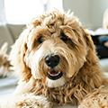 犬との暮らしに必要なものは?~グッズや費用、心構えについて~