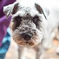 犬とは部屋で共に暮らしたい?(室内飼育) 犬は家屋の外で飼いたい?(屋外飼育) メリット/デメリットや注意点を解説