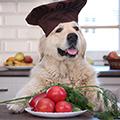 「夏の体調管理」と「愛犬も食べられる夏野菜」