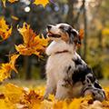 愛犬も食べられる秋の食材(野菜・果物)