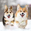 愛犬も食べられる冬の食材~ドッグフードは温めた方がいい?~