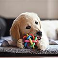 犬用おすすめ知育玩具ランキングTOP10!効果や選び方についても解説