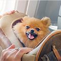 愛犬とのお出かけで注意すべきポイント!必要な持ち物や車で出かける際の注意点も
