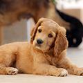 犬の去勢はいつすべき?メリットやデメリット、費用相場について獣医師が解説!