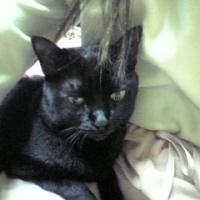 【12歳以上の高齢猫に】 ロイヤルカナン エイジング 12歳以上