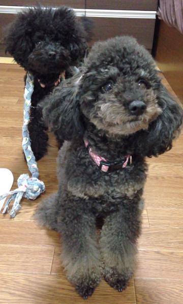 サヨ デンタルジーンズ (デニム生地の犬用おもちゃ)