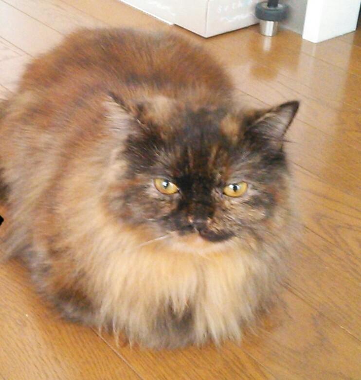 アルモネイチャー 成猫用 フレッシュチキン