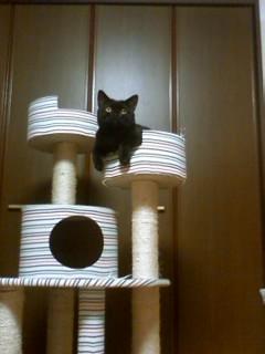 【肥満気味の猫に】 ロイヤルカナン ライト ウエイトケア