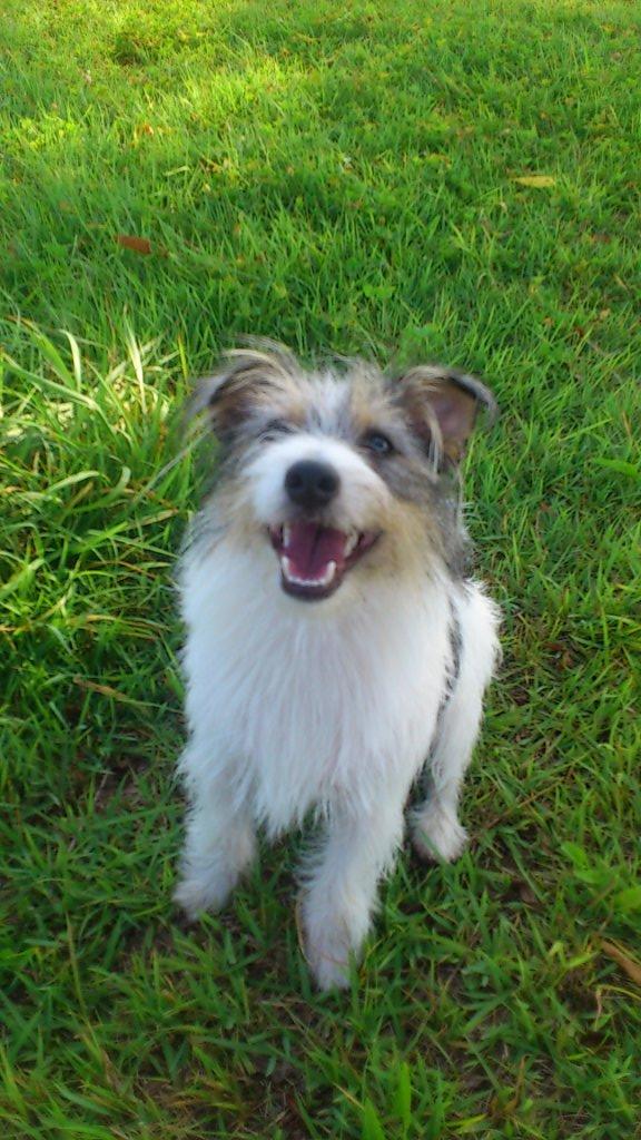 ナチュラルチョイス 減量用 全犬種用 成犬用 ラム&玄米 (ナチュラルフード)