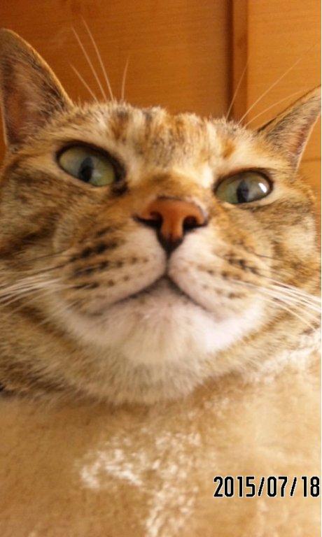 アズミラ 猫用 オーシャンフィッシュ
