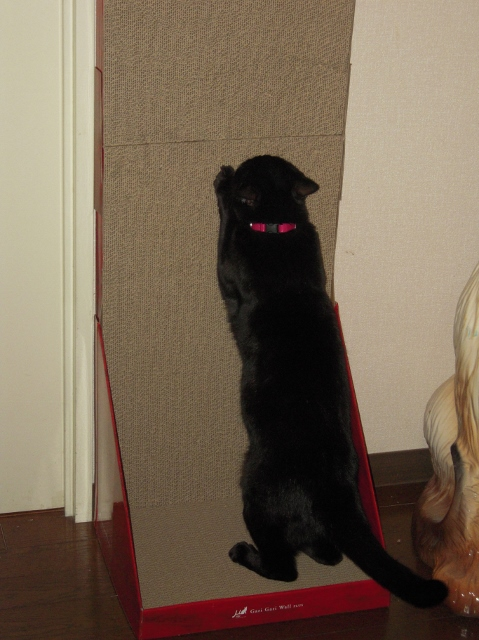 ガリガリウォール (猫用ダンボール製爪とぎ)