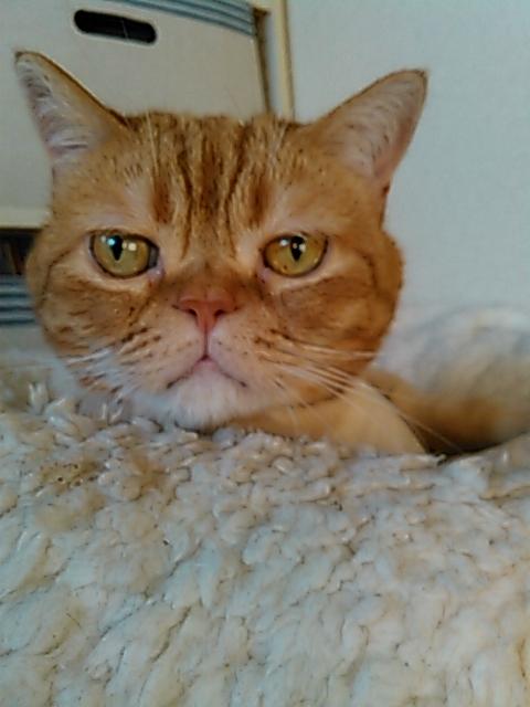 【健康な尿を維持したい猫に】 ロイヤルカナン ユリナリーケア(キャットフード)