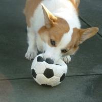 ランコ ボールシリーズ (天然ゴム製の犬用おもちゃ)