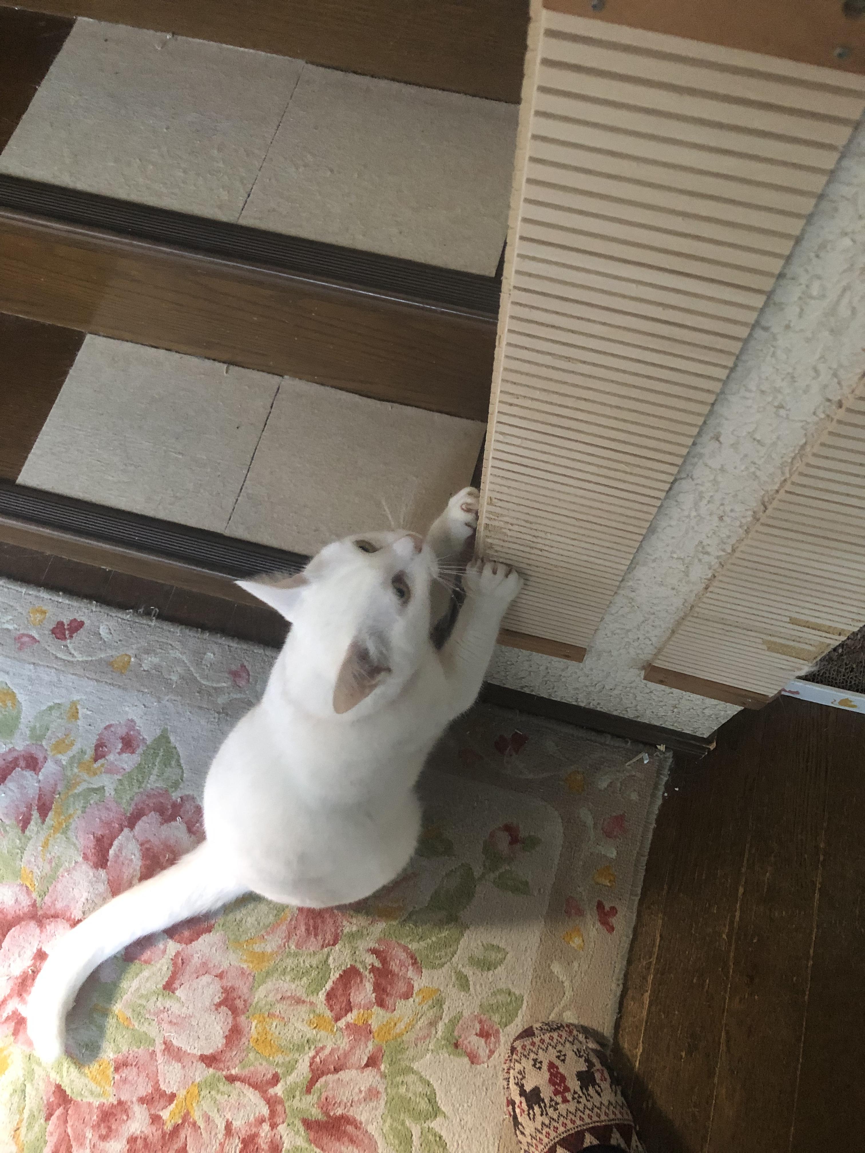 壁に貼れる爪とぎボード (壁保護爪とぎ)