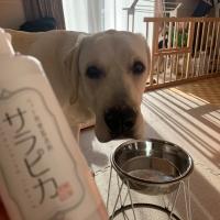 ペット用食器洗剤サラピカ