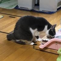 フォルツァ10キャット アクティウェット(猫用ウェットフード)