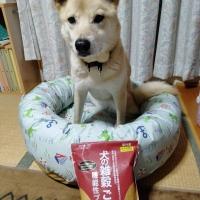 犬の雑穀ごはん 機能性アクティブチキン