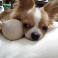 ニュートロ シュプレモ 超小型~小型犬 体重管理用 (ナチュラルフード)